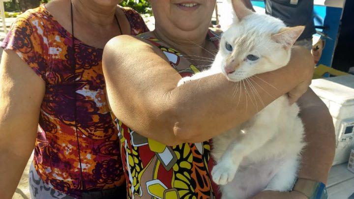 Vigilância Sanitária vacinaram cães e gatos neste sábado, 29, na Ilha da Gigóia