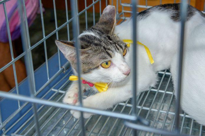 Campanha de adoção de cães e gatos será realizada no dia 14 de setembro