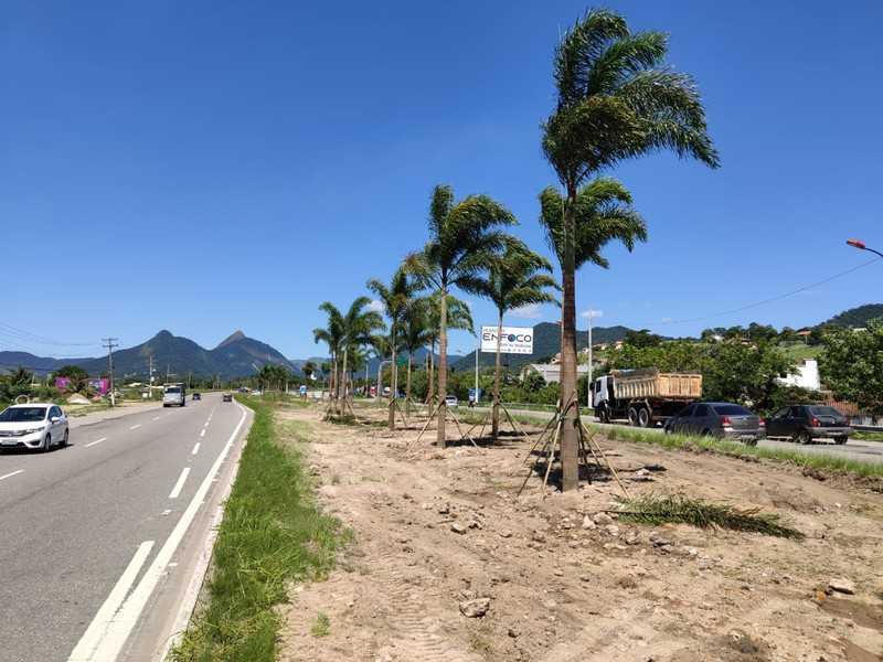 Canteiros da RJ-106, em Maricá, recebem mudas de palmeiras e ipês
