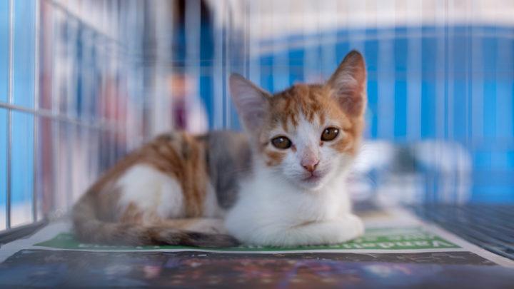 Campanha de adoção de cães e gatos neste sábado