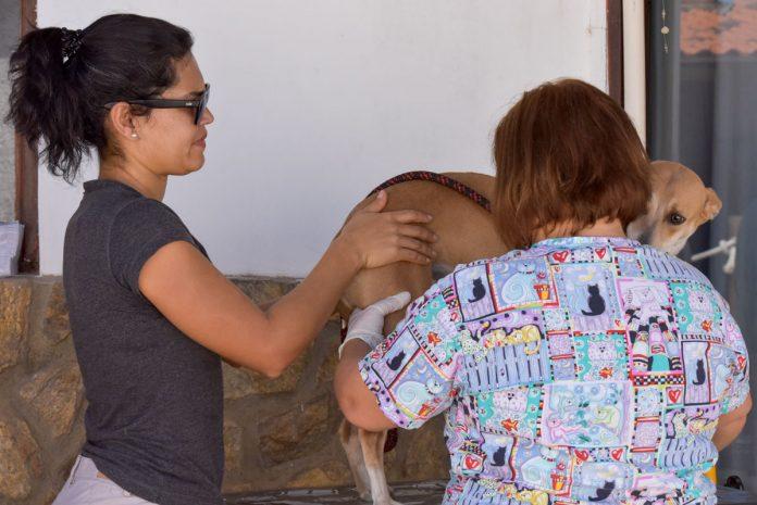 Prefeitura distribui senhas para castração de animais