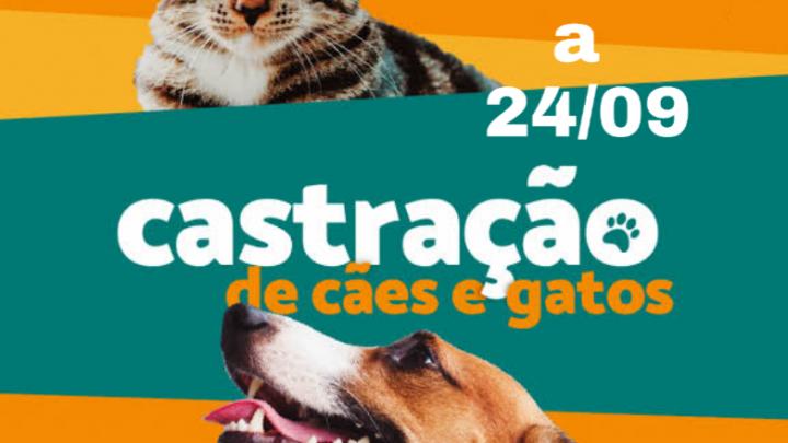 Castração de animais começa nesta quarta (23)