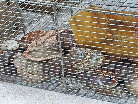 Polícia Civil prende dono de  aviário que abatia e vendia caramujos impróprios para consumo