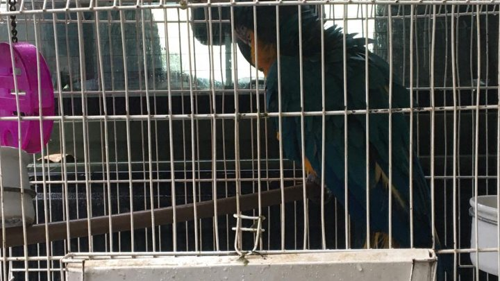 PM apreende animal silvestre em Maricá