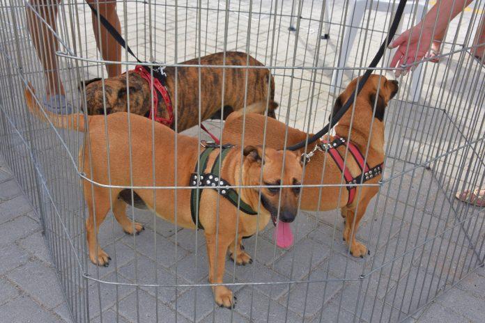 Coordenadoria de Proteção Animal realiza primeira campanha de adoção de 2021