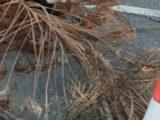 Afundamento de asfalto na Região Central de Maricá gera preocupação aos moradores locais.