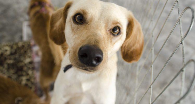 Maricá realiza neste domingo (23/05), campanha de adoção de animais.